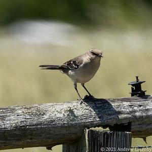birds in may-0566