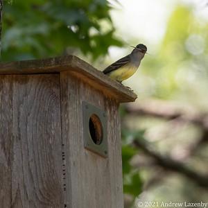 birds in may-0586