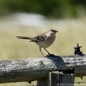 birds in may-0562