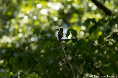 birds in may-0567