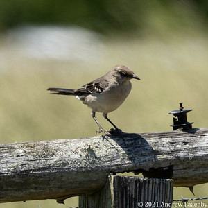 birds in may-0563