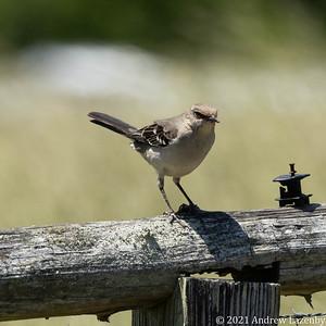 birds in may-0565