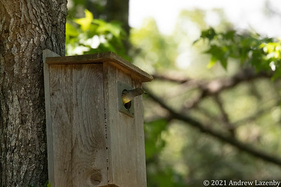 birds in may-0603