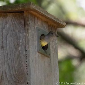 birds in may-0605