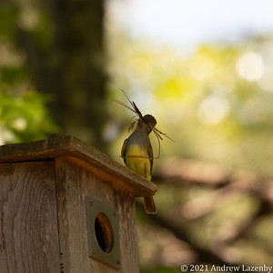 birds in may-0569