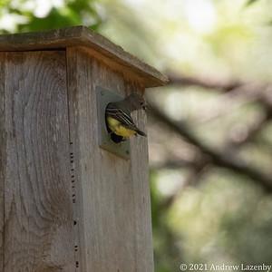 birds in may-0594