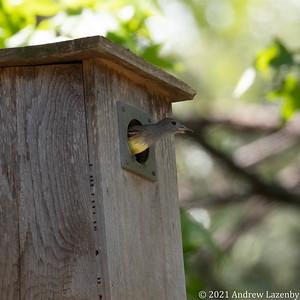 birds in may-0578
