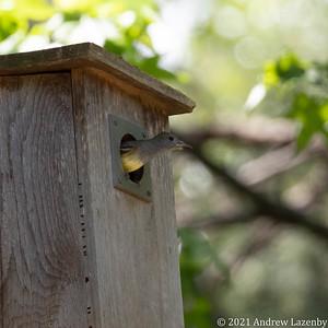 birds in may-0579