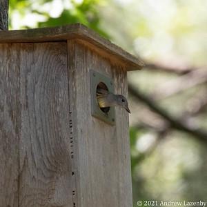 birds in may-0600