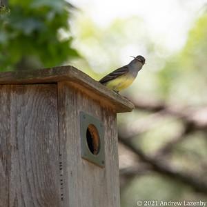 birds in may-0584