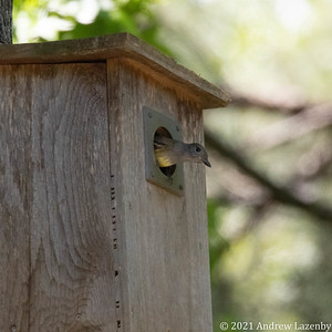 birds in may-0601