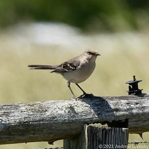 birds in may-0561