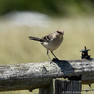 birds in may-0564
