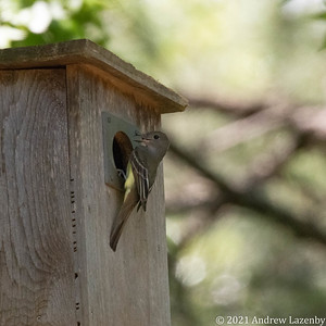 birds in may-0597
