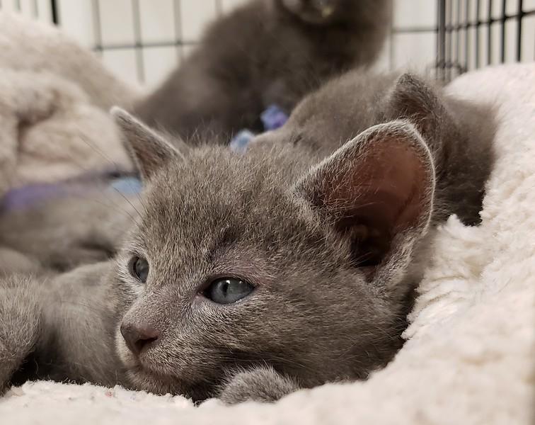 Kitten Intake