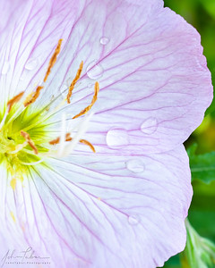 Flower - wet on pink