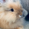 Floofiest Bunny Award - LEONARD (LENNY) SCHMIDT