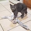 Most Playful Kitty Award - CHURCHILL