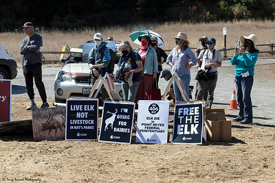 Save the Elk, Pt Reyes 17 (Terry Scussel)