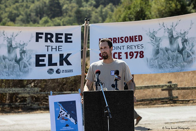 Save the Elk, Pt Reyes 22 (Terry Scussel)