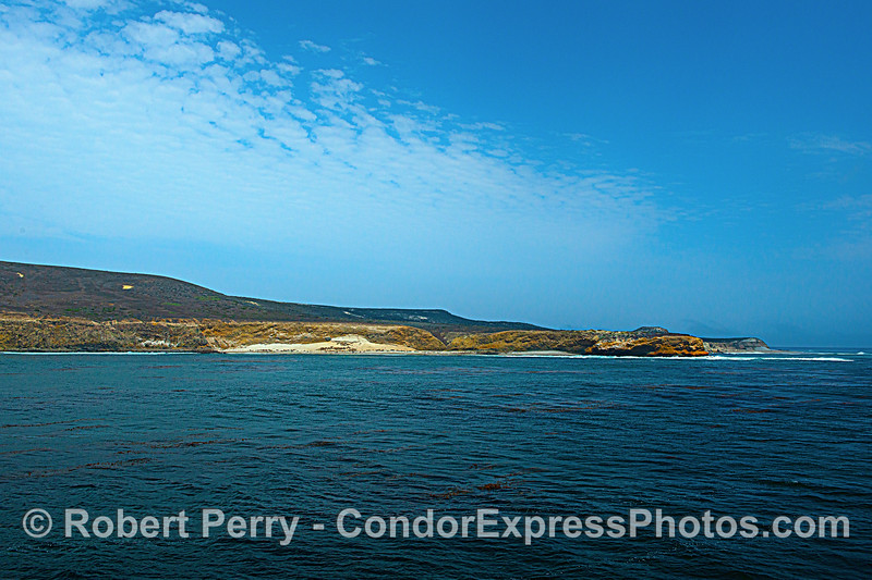 San Miguel Island. Cardwell Point. Little dots on sand are mostly California sea lions and a few nothern elephant seals.