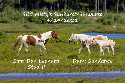 SunburstMontage_4x6