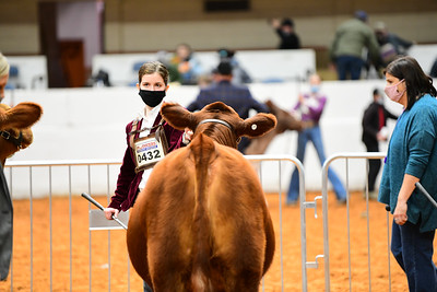 MH21-COW_6142