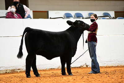 MH21-COW_6128