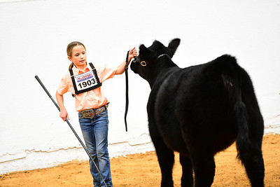 MH21-COW-_5111