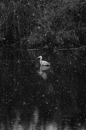01 winter - Yvonne Dalschen