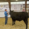 Fair, fairgrounds, market, Moro, steer, beef