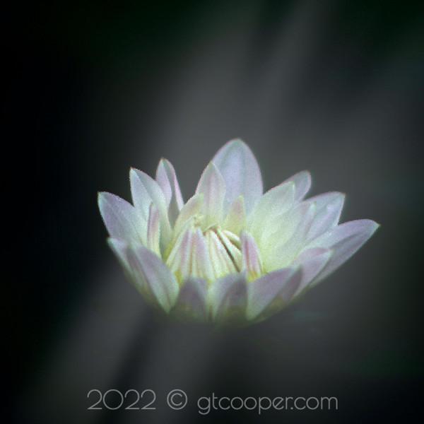 From the Garden — White