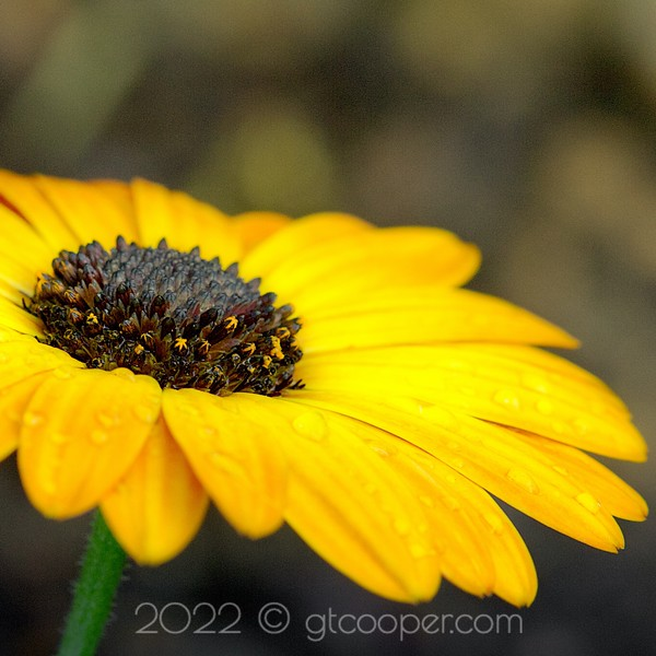 Flora & Garden