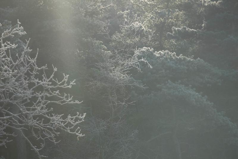 skånsö_2021-01-16_121257