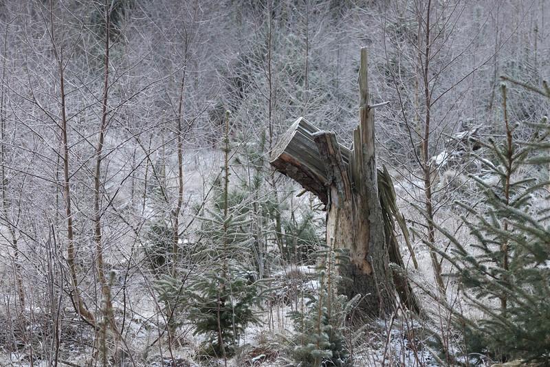 skånsö_2021-01-16_130049
