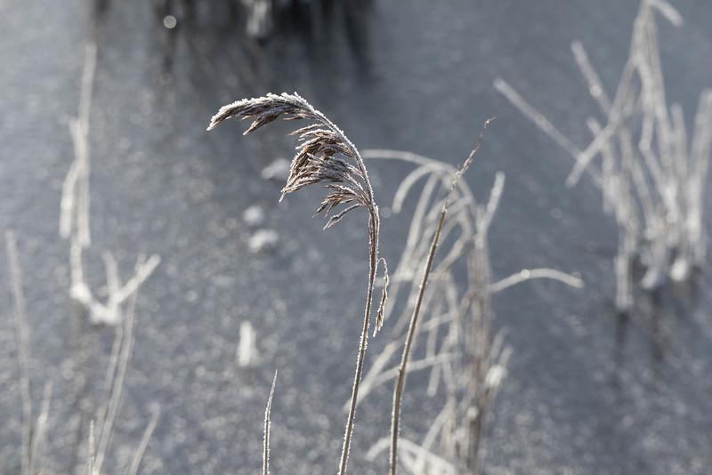 skånsö_2021-01-16_121125