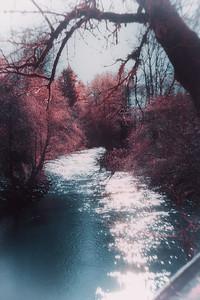 Infrared - Dallas Oregon City Park