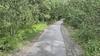 Play video clip. Eastern Diamondback Rattlesnake crossing the trail.