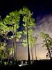 Long Pine Key Campground Everglades.