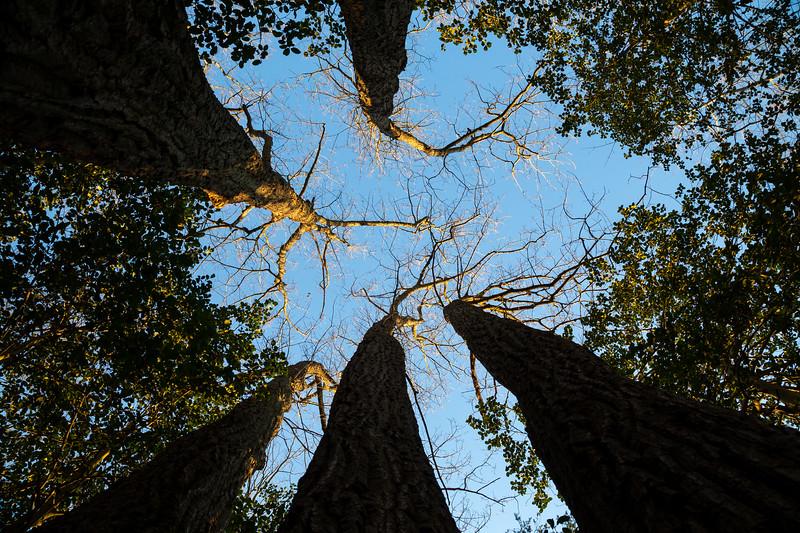 Five Oak