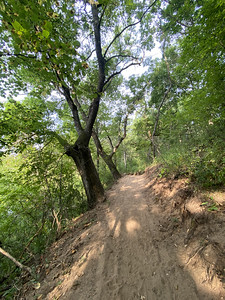 They came through here with some kind of backhoe and they ripped up every tree by the roots and then came by with a plate compactor to make this trail.