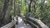 Video clip of Mahogany Hammock, Everglades National Park