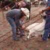 Ant-7 9 16-0-4 Goats - 00002