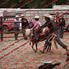 Ant-7 9 16-0-4 Goats - 00015