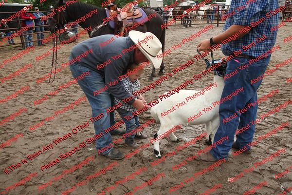 Ant-7 9 16-0-4 Goats - 00001