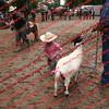 Ant-7 9 16-0-4 Goats - 00017