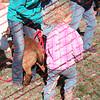 BLAIS0-4 Goats = 00013
