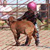 BYR2016 Goats = 01473