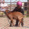 BYR2016 Goats = 01472