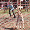 BYR2016 Goats = 00304